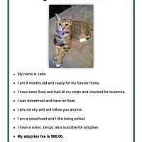 Adopt A Pet :: Jada - Orange City, FL