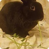 Adopt A Pet :: Elephant - Oak Park, IL