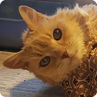 Adopt A Pet :: Chardonnay - Lafayette, NJ