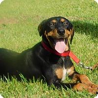 Adopt A Pet :: Sasha - Oakdale, LA