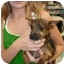 Photo 1 - Cairn Terrier Mix Puppy for adoption in Lonedell, Missouri - Toto