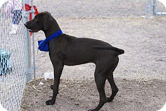 Labrador Retriever Mix Dog for adoption in Corpus Christi, Texas - Tula
