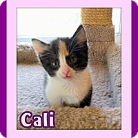 Adopt A Pet :: Cali - Omaha, NE