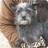 Adopt A Pet :: Lindy - Kingsburg, CA