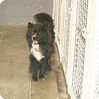 Adopt A Pet :: Samson - Windsor, MO