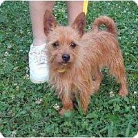 Adopt A Pet :: Rhiley - Allentown, PA
