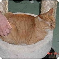 Adopt A Pet :: Garfield - Pendleton, OR