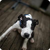 Adopt A Pet :: April - Reisterstown, MD