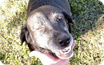 Labrador Retriever Dog for adoption in Washington, D.C. - Sandi and Lad