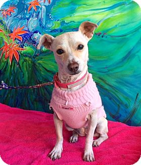 Terrier (Unknown Type, Small) Mix Dog for adoption in Santa Monica, California - JOSSIE