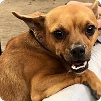 Adopt A Pet :: Ralph - Houston, TX