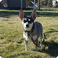 Adopt A Pet :: Odie - Cuddle Bug! - Bend, OR