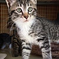 Adopt A Pet :: LITTLE SAMMY - San Pablo, CA