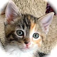 Adopt A Pet :: Mignon - Palo Alto, CA