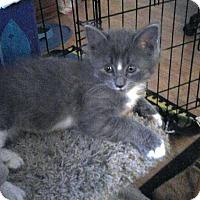 Adopt A Pet :: Mouse - Sacramento, CA