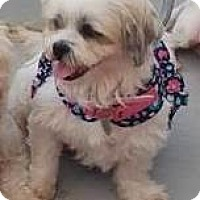 Adopt A Pet :: Summer - San Diego, CA