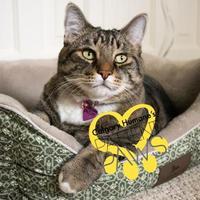 Adopt A Pet :: Bixbee - Calgary, AB