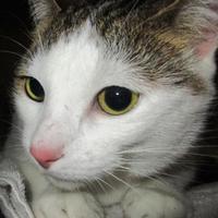 Adopt A Pet :: Coon - Memphis, TN