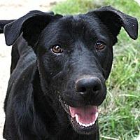 Adopt A Pet :: PADEN (from Silverado) - Carrollton, TX