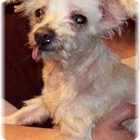 Adopt A Pet :: Chandler - Dayton, OH
