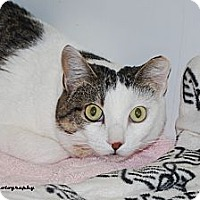 Adopt A Pet :: Charisma - Lincoln, NE