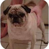 Adopt A Pet :: Rufus - Windermere, FL