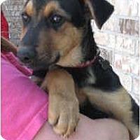 Adopt A Pet :: Susan - Arlington, TX