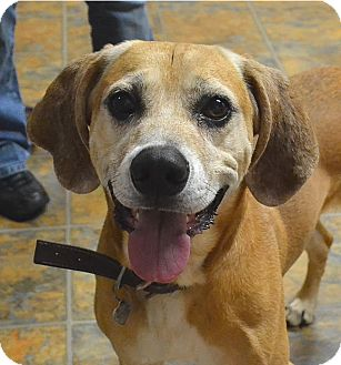 Hound (Unknown Type) Mix Dog for adoption in Albion, New York - Jake