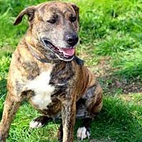 Adopt A Pet :: ELLA MAY - Norfolk, VA