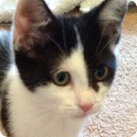 Adopt A Pet :: Pepper - Irvine, CA