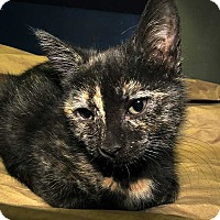 Adopt A Pet :: Lunita - Norwich, NY