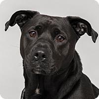 Adopt A Pet :: Princess - Westfield, NY