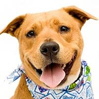 Labrador Retriever/Terrier (Unknown Type, Medium) Mix Dog for adoption in Sanford, Florida - Nala
