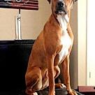 Adopt A Pet :: Oscar II - Denton, TX