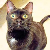 Adopt A Pet :: Anna - Morganton, NC