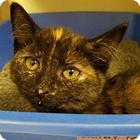 Adopt A Pet :: Loretta - Elyria, OH