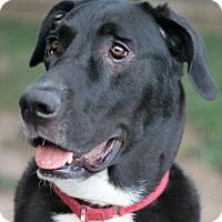 Adopt A Pet :: Biggie Smalls - Stafford, VA