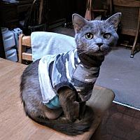 Adopt A Pet :: Biskit *No Fee 8/2 - 8/31* - Ottawa, KS