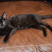 Adopt A Pet :: Nika - Staten Island, NY