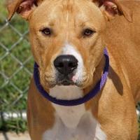 Adopt A Pet :: King - Toccoa, GA
