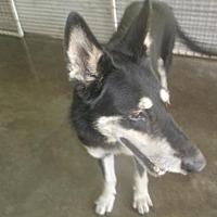 Adopt A Pet :: Remy - Bonifay, FL