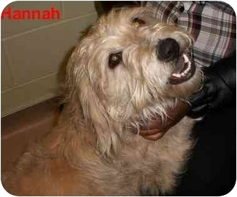 Terrier (Unknown Type, Medium) Mix Dog for adoption in Slidell, Louisiana - Hannah