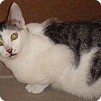 Adopt A Pet :: Sonny - Kensington, MD