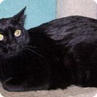 Adopt A Pet :: Lori - Colorado Springs, CO