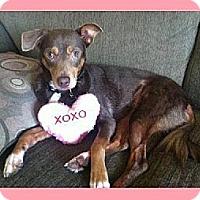 Adopt A Pet :: London - Whittier, CA