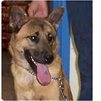 Adopt A Pet :: Serenity - Courtesy post - Scottsdale, AZ