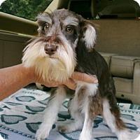 Adopt A Pet :: Cody - Silsbee, TX