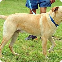 Adopt A Pet :: Gulliver - Lewisville, IN