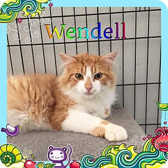 Domestic Longhair Cat for adoption in Atco, New Jersey - Wendell