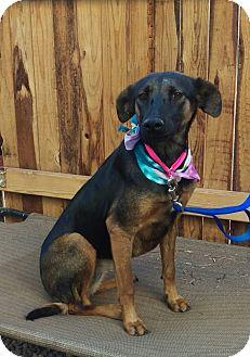 German Shepherd Dog Mix Dog for adoption in Apache Junction, Arizona - Tasha